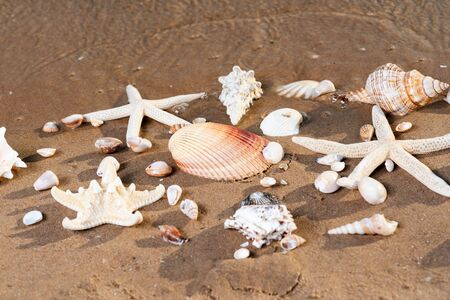 Sea Stars and Sea Shells on wet sand on the beach at sunrise.