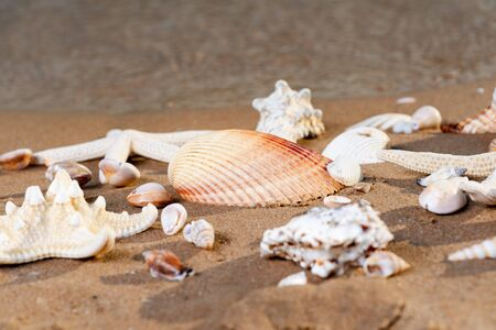 Sea Stars and Sea Shells on wet sand on the beach at sunrise.