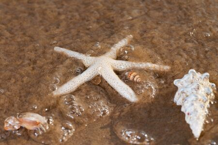Sea Stars and Sea Shells on wet sand on the beach at sunrise. Banque d'images - 128873500