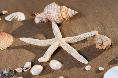 Sea Stars and Sea Shells on wet sand on the beach at sunrise. Banque d'images - 128873501