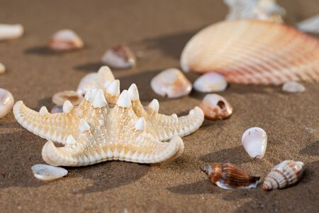 Sea Stars and Sea Shells on wet sand on the beach at sunrise. Banque d'images - 128873496