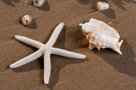 Sea Stars and Sea Shells on wet sand on the beach at sunrise. Banque d'images - 128873510
