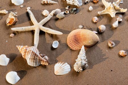 Sea Stars and Sea Shells on wet sand on the beach at sunrise. Banque d'images - 128873506