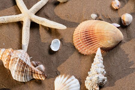Sea Stars and Sea Shells on wet sand on the beach at sunrise. Banque d'images - 128873507