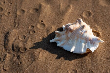 Summer time concept with Sea Shells on wet sand near the water on the beach at sunrise. Banque d'images - 128873461