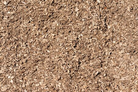 Wooden Chips used as Organic Mulch in gardening, landscaping, restoration ecology, bioreactors for denitrification, as substrate for mushroom cultivation. Reklamní fotografie