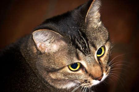 黄色緑目と茶色の猫