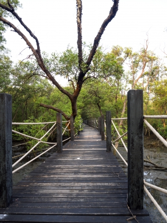 Wood path way among the Mangrove forest