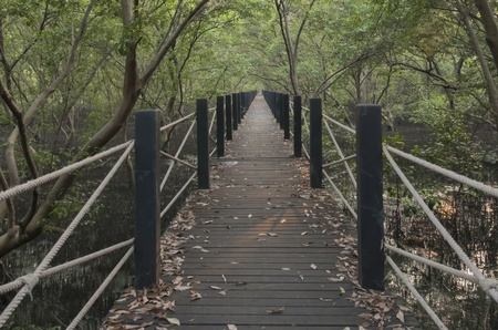 Wood path way among the Mangrove forest photo