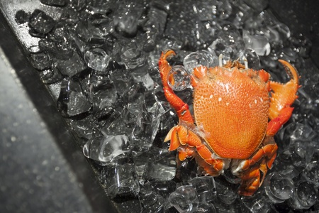 crab on ice close up. Delicious and fresh seafood
