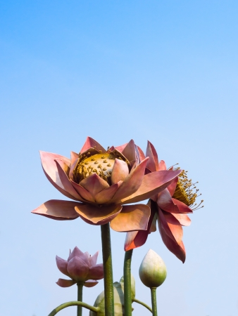 Lotus Flowers Statue in blue sky Stock Photo