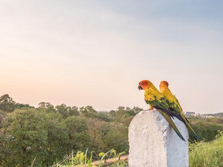 cornerstone: Colorful couple macaws sitting on a kilometer stone on the road, selective focus