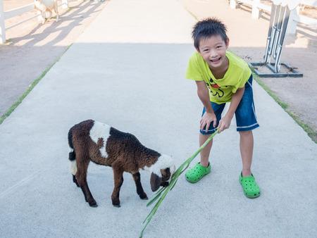 Asian boy Feeding a Sheep Stock Photo