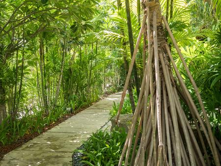 tropical garden: walk way path in the tropical garden