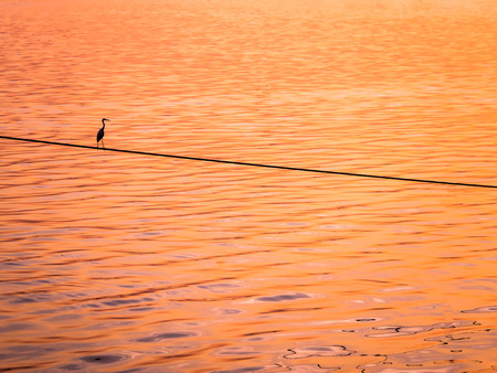 white perch: Little Chinese egret bird perched on a rope over the sea, in sunset light