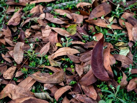Texture with dried leafs  in the forest, selective focus