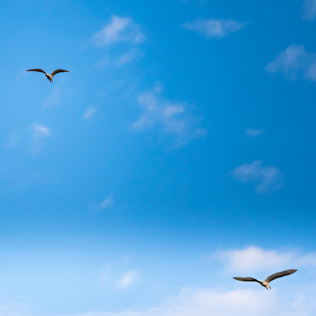 two white seagulls flying in a cloudy sky. above and below composition Stock Photo