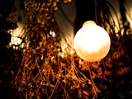 vintage incandescent light bulb filament on black, dry flower in background
