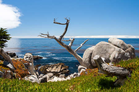 Pescadero Point at 17 Mile Drive. The 17 Mile Drive is a scenic road through Pacific Grove and Pebble Beach, Big Sur, Monterey, CA. photo