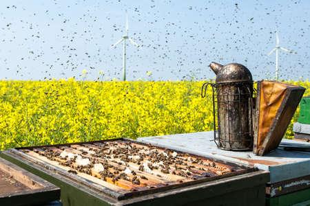 bee swarm: Imkerpfeie on beehives on rapeseed field with bee swarm