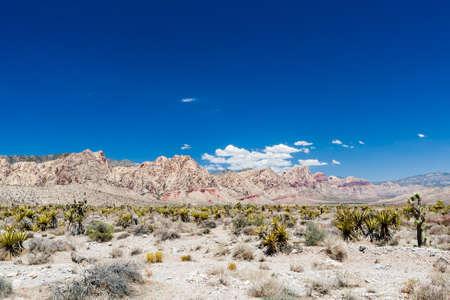 pflanze: Red Rock Canyon Panorama in der Nahe von Las Vegas. Stock Photo
