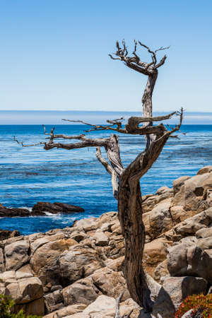 mile:  The 17 Mile Drive is a scenic road through Pacific Grove and Pebble Beach in Big Sur, Monterey, California, USA.
