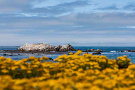 pebble beach:  The 17 Mile Drive is a scenic road through Pacific Grove and Pebble Beach in Big Sur, Monterey, California, USA.