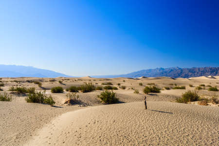 stovepipe: Death Valleys Stovepipe Wells Dunes are recreated with every gust of wind. Caught in the late afternoon sun, dune ridges and ripples cast their intricate shadows across this California desert.