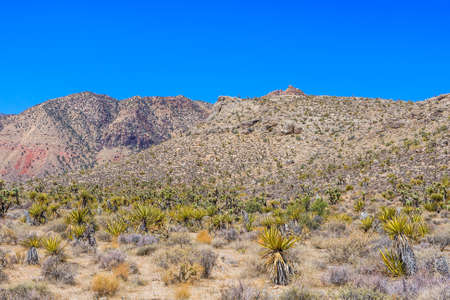 red rock national conservation area: Majestic sandstone escarpment dominates the Red Rock Canyon National Conservation Area. Narrow canyons along the escarpment are popular day-hike destinations.