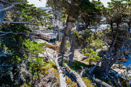 pebble beach: Cypress Point, 17 Mile Drive, Big Sur, California, USA - July 1, 2012: The 17 Mile Drive is a scenic road through Pacific Grove and Pebble Beach in Big Sur, Monterey, California, USA. Editorial