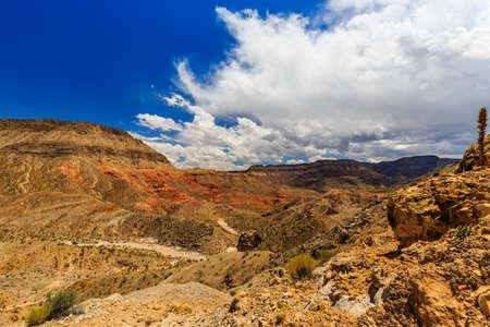 joshua: Landscape with Joshua Trees at Joshua Tree Road in the Mojave Desert near Scenic Backway.