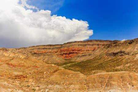 joshua: Along Joshua Tree Road in the Mojave Desert near to the Scenic Backway.
