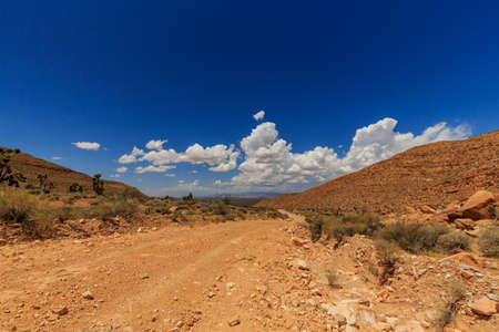 à ¢ â,¬Å â,¬Å¾Joshua Tree Roada ¢ Mojave Desert (Scenic Backway)