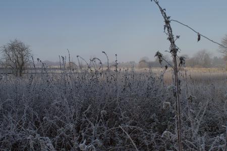 hoarfrost: Hoarfrost Landscape