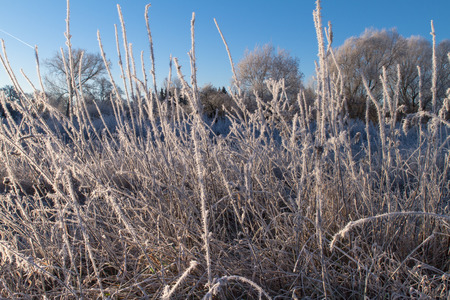 ice crystals: Early Morning Ice Crystals On Grass Krefeld