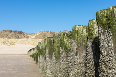 dyke: Timber Piles On The Beach Of Netherlands