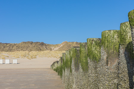 algal: Wooden Poles With Pattern Of Algae And Mussles At Beach - Wave Breaker