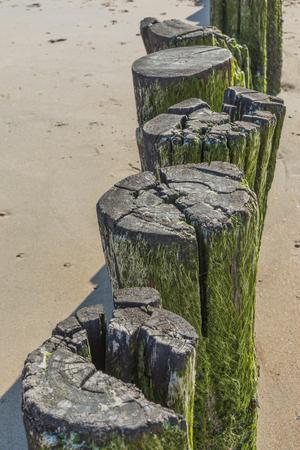 algal: Old Broken Wooden Pole With Algae Pattern At Beach - Wave Breaker