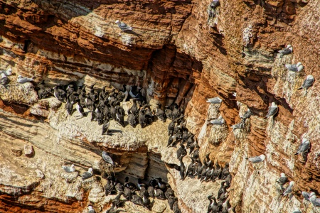 rote: Colony of Birds Stock Photo