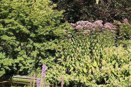 un: Impressions out of the Planten un Blomen, Hamburg
