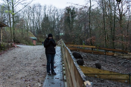 19 years old: A young woman stands in front of a wild boar enclosure in a wildlife park  Stock Photo
