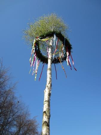 midsummer pole: A may tree or maypole