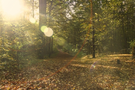 transience: An autumn landscape in a forest in Kiel Stock Photo