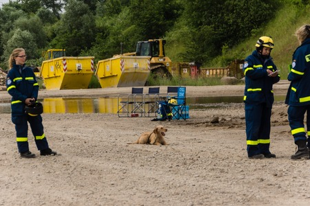 techincal: Future rescue dogs at the Federal Agency for Technical Relief are checked in ruins and forests  Editorial
