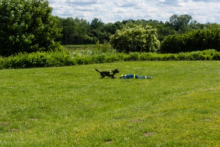 techincal: Ruins and forests as a training ground for future rescue dogs at the Federal Agency for Technical Relief