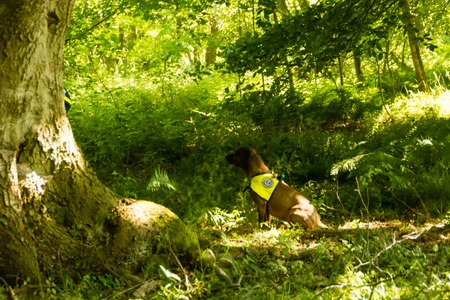 techincal: Ruins and forests as training ground for future rescue dogs at the Federal Agency for Technical Relief