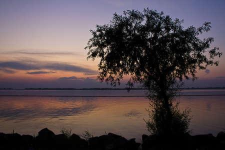 purples: Tree at sunset