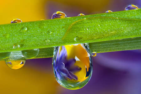 Wild flowers refracted in water droplets on a single blade of grass