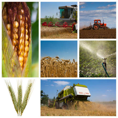 crop: High relolution Montage or collage of agricultural images