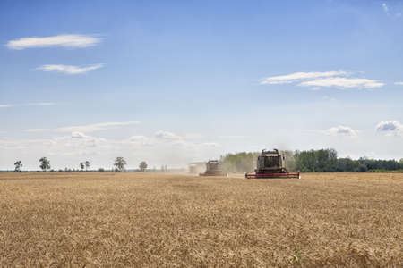harvesters: Three combined harvesters collecting from a wheat or barley field